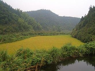 Tongshan County - Rice fields near Hengshitan