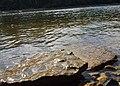 Hidden Falls - St Paul, MN - panoramio (12).jpg