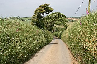 Cornish hedge - Country lane in St Newlyn East