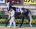 Hishi Miracle 20041031P2.jpg