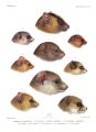 Histoire naturelle des mammifères, Tome VI, Atlas III, Plate 259.png