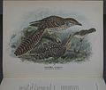 History of the birds of NZ 1st ed p072-2.jpg