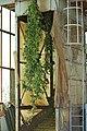 Hop cultivars.jpg