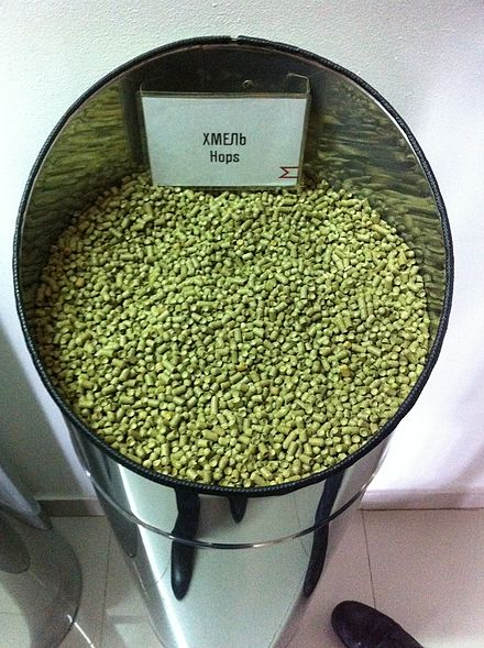 Hops sample at the Moscow Brewing Company Hops are used for beer brewing.JPG