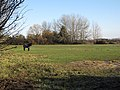 Horse Paddock by Hasse Road - geograph.org.uk - 1651867.jpg