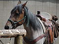 Horseback Riding Piney River Ranch Vail Colorado.JPG