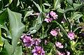 Humboldt County Garden (120856825).jpeg
