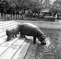 Hungary, Budapest XIV., Zoo Fortepan 56814.jpg