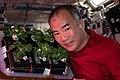 ISS064E047074 - Soichi Noguchi smells Pak Choi aboard the ISS.jpg