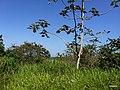 Iguape - SP - panoramio (244).jpg