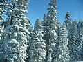 Ilgaz in winter.JPG