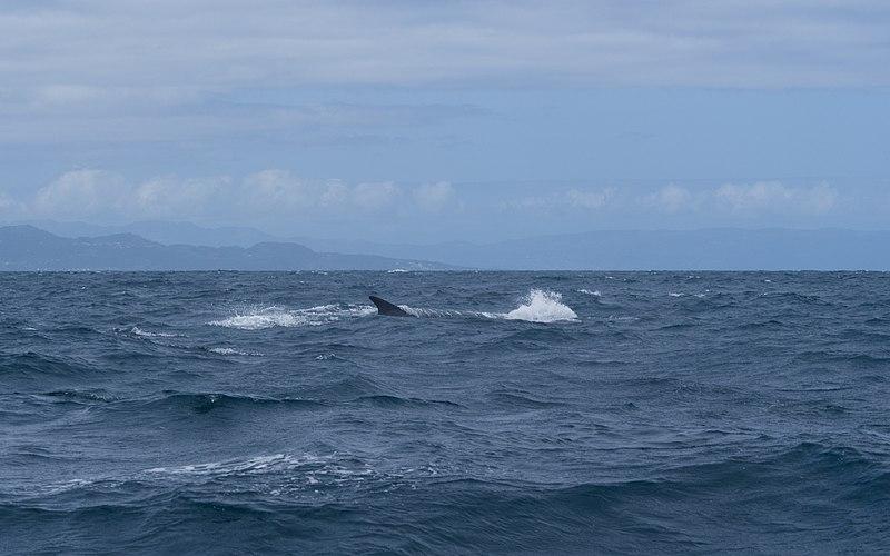 File:Ilha do Pico P6010473 (35239695011).jpg