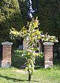 Ilketshall St Andrew - geograph.org.uk - 983444.jpg