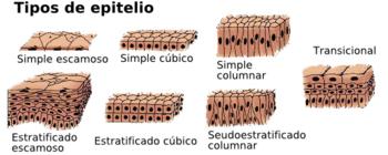 REUMATISMO DE PDF TEJIDOS BLANDOS