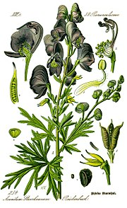 Illustration Aconitum napellus0 clean