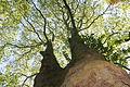 Im Naturschutzgebiet Uelzener Heide, Mühlhauser Mark, Unna 03.JPG