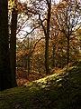 In Castle Woods - geograph.org.uk - 1079134.jpg