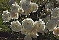 In an Ethiopian Garden (2141035329).jpg