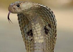 Schlangen Wiki