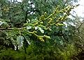 JNU Tree Branch.jpg