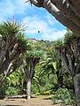 Jardín canario 71.JPG