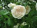 Jardin a la faulx 126.jpg