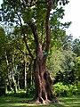Jardin des plantes Nantes-arbousier.jpg
