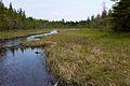 Jordan Pond marsh.jpg