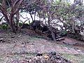 Jumba la Mtwana-restaurant Monsoons.jpg