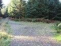 Junction of forestry tracks - geograph.org.uk - 1636032.jpg
