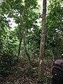 Jungle in Chitwan.jpg