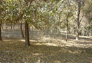 Jungle in chak110.jpg
