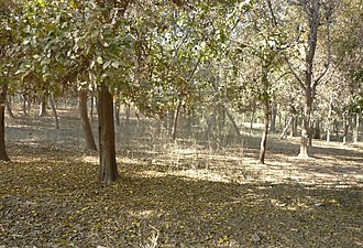 Sahiwal District - View of a Jungle in distt. Sahiwal