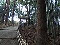 Kairaku-en bamboo grove and cedar woods.jpg