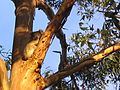 Kangaroo Island (2052420344).jpg