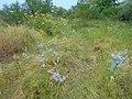 Kanivs'kyi district, Cherkas'ka oblast, Ukraine - panoramio - юра запеченко (23).jpg