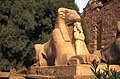 Karnak-16-Widdersphinx-1982-gje.jpg