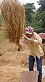 Khamsone threshing rice (5142988487).jpg