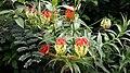 King Flower.jpg