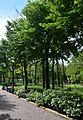 Kirovohrad Arboretum 05 (YDS 2156).jpg