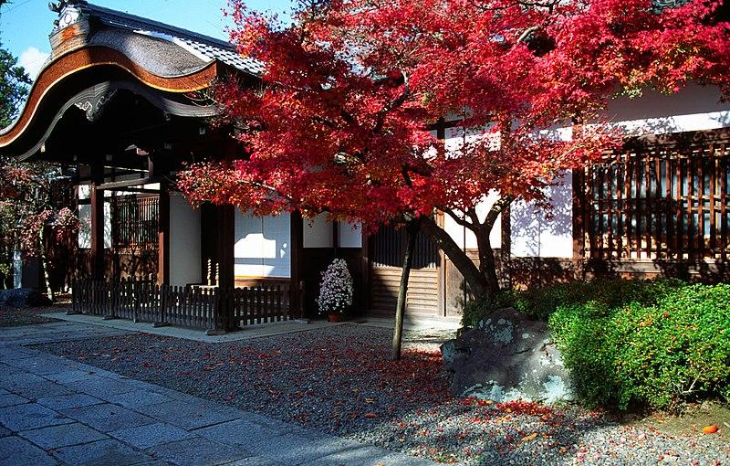Arce palmatum osakazuki - Arce japones cuidados ...