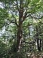 Koritata protected area, Varvara, Bulgaria 04.JPG