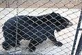 Kunming City Zoo Bear Cub (9964738566).jpg