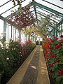 Laika ac Royal Greenhouses of Laeken (6317147370).jpg