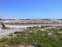 Lamberts Bay P1010337.JPG