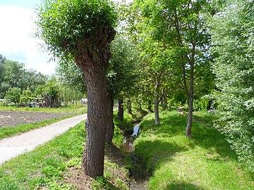 """Landschaftsschutzgebiet """"Gonsbachtal"""" bei Mainz-Gonsenheim- Felder am Gonsbach.jpg"""