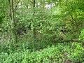 Langenfeld Nähe Haus Graven 0005.jpg