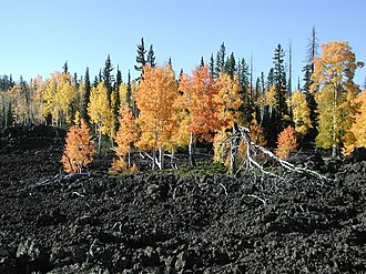 Dixie National Forest - Image: Lava fall aspen