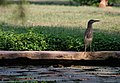 Law Garden, Ahmedabad - India (4052851328).jpg