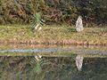 Le Change Lac Couyaud étang réflection (3).JPG